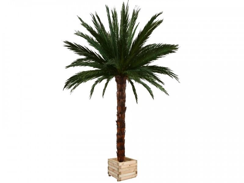 Naos location specialiste de la location de palmier for Vente palmier artificiel